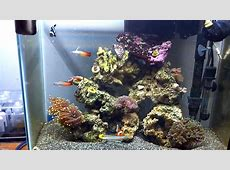 10 gallon aquarium filter reviews