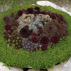 giardini piante grasse per esterno piante grasse da esterno adatte in vaso 3 vivaio