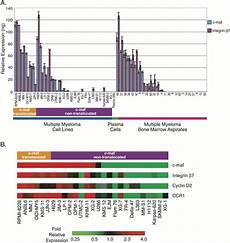 overexpression of c maf is a frequent oncogenic event in