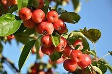 arbuste fruit fruit trees citrus green nursery