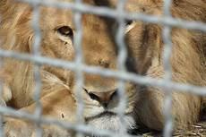 animali in gabbia comunit 224 ellenica della toscana tirrenica dicembre 2012