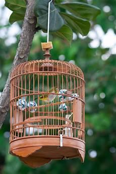 gabbia uccello gabbia di uccello fotografia stock immagine di birdcage