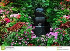 fiori a cascata fiori cascata in giardino immagini stock libere da