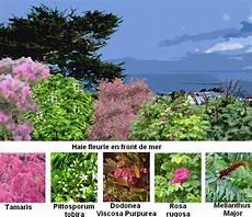 haie arbuste 224 feuillage persistant fleur de