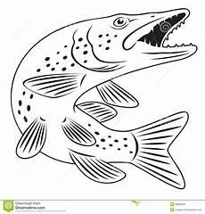 malvorlagen fische hecht x13 ein bild zeichnen