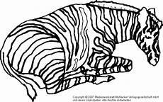 Bilder Zum Ausmalen Zebra Zebra 2 Medienwerkstatt Wissen 169 2006 2017 Medienwerkstatt