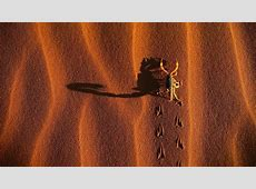 Scorpion Wallpapers   Wallpaper Cave