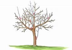 Walnussbaum Schneiden 187 Tutorial Mit Anleitungen Und