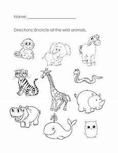animals worksheets for nursery 13977 animals worksheet by aileen chu teachers pay teachers