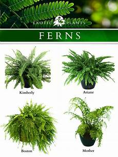 ferns i am now in love with ferns floral