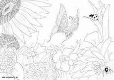 Ausmalbild Schmetterling Wiese Pin Auf Ausmalbilder