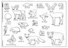 Malvorlagen Tiere Des Waldes Natur Wald Tiere Pflanzen Henkel Tiere Waldtiere Wald