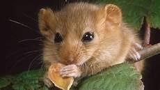 Was Essen Mäuse In Der Natur - schlummerstrategien den winter verschlafen wissen