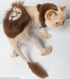 the most ridiculous cat haircuts you ll ever see boredbug
