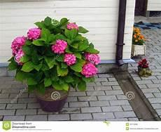 pot de fleurs extérieur 76170 fleur exterieur pivoine etc
