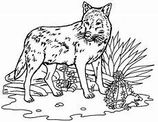 wolf coloring pages wildwolfkids