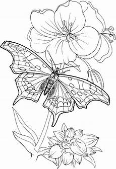 Malvorlagen Senioren Ausdrucken Free Printable Coloring Pages Adults Only Coloring Home
