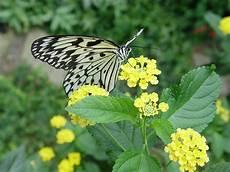 File Schmetterling Blume Jpg Wikimedia Commons
