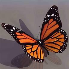 Schmetterling 3d - 3d model of a beautiful butterfly 3d model