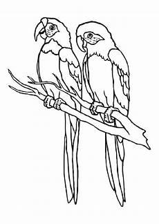 Ausmalbilder Kostenlos Zum Ausdrucken Papageien Malvorlage Papageien Kostenlose Ausmalbilder Zum Ausdrucken