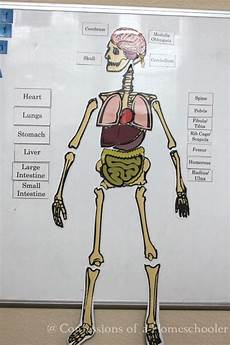 life size human anatomy activity confessions of a homeschooler