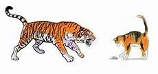 Resourceful Parenting Kisah Kucing Dan Harimau