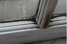 Black Mold Is It Toxic Or Non Toxic Mold Awareness