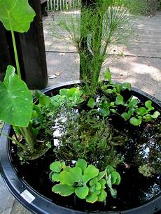diy create your own water garden in a container our fairfield home garden