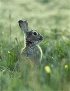 Malvorlage Hase Seitlich Unterschied Zwischen Kaninchen Und Hasen