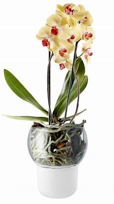 orchidea vaso trasparente vaso con riserva di bianco made in design