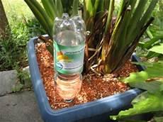 zimmerpflanzen im urlaub bewässern tipps zur richtigen urlaubsbew 228 sserung diese rombergs