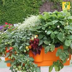 den balkon als mini gem 252 sebeet nutzen gt gt tomate evita