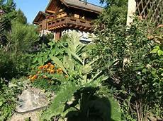 giardini di montagna coltivare carciofi in montagna il giardino di montagna