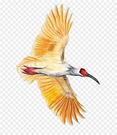 Menakjubkan 13 Gambar Burung Pensil Gani Gambar