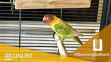 papagei kaufen ebay papagei kaufen ebay aras with papagei kaufen ebay finest