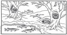 free printable coloring pages hibernating animals 17014 find the animals hibernating animals then graph how many of each that you find animals that