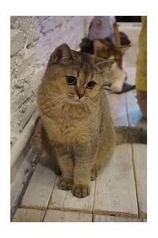 katze durchfall und erbrechen durchfall und erbrechen bei katzen haustier frage