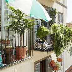 Quelles Plantes Grimpantes Pour Un Balcon