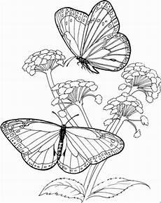 Malvorlage Schmetterling Mit Blume 2 Gr Schmetterlinge Auf Blumen Ausmalbild Malvorlage