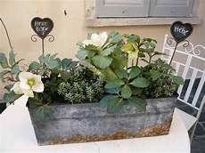 piante da davanzale con le piante da terrazzo come decorare il davanzale nel