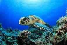 Wow 5 Jenis Hewan Laut Asli Indonesia Ini Akan Membuat Lo