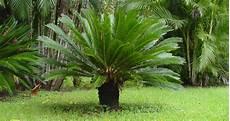 lista de plantas que crecen a la sombra lifehacks de luisa olvera