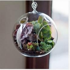 plante suspendue verre plantes en goguette jardin int 233 rieur terrarium et id 233 es