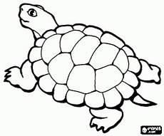 Ausmalbilder Reptilien Malvorlagen Ausmalbilder Reptilien Malvorlagen 2