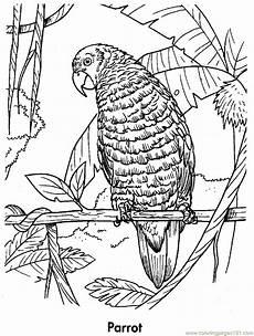 parrot coloring page free parrots coloring pages