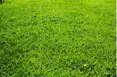 Rasen Mähen Vor Dem Winter - rasenpflege im herbst 187 so st 228 rken sie ihn vor dem winter