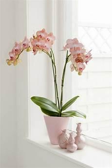 orchideen deko ideen orchidee pflegehinweise und n 252 tzliche infos 252 ber die k 246 nigin der zimmerpflanzen dekoration
