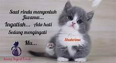 Gambar Kucing Rindu Kumpulan Gambar Menarik