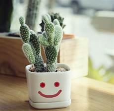 Der Kleine Grüne Kaktus - die 5 sch 246 nsten zimmerpflanzen floraqueen deutschland