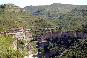 Image result for abacía